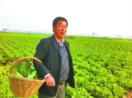 预计王大爷家今年_王大爷家今年白菜和萝卜共收获200千克,已知萝卜的重量正好是白菜的三